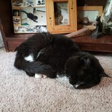 Photo for Looking For A Pet Sitter For 4 Cats In Kingwood