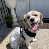Photo for Looking For A Pet Sitter For 1 Dog In Secaucus