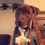 Photo for Looking For A Dog Walker For 1 Dog In Westerville