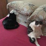 Photo for Seeking Loving Cat Sitter
