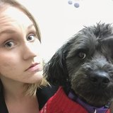 Photo for Looking For A Pet Sitter For 1 Dog In Chicago