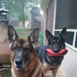 Photo for Looking For A Pet Sitter For 1 Dog In Harrisburg