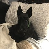 Photo for Looking For A Pet Sitter For 1 Dog In Marietta