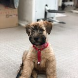 Photo for Walker Needed For 1 Dog In Waltham