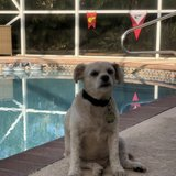 Photo for Looking For A Pet Sitter For 3 Dogs In Wellington