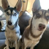 Photo for Looking For A Pet Sitter For 2 Dogs In Albuquerque