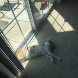 Photo for Sitter Needed For 2 Cats, 1 Dog In Danbury