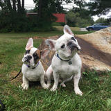 Photo for Walker Needed For 2 Dogs In Nashua