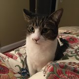 Photo for Sitter Needed For 1 Cat In Los Angeles