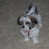 Photo for Looking For A Pet Sitter For 2 Dogs In Parker