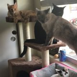 Photo for Looking For A Pet Sitter For 4 Cats In Antioch