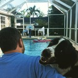 Photo for Looking For A Pet Sitter For 1 Dog In Fort Myers
