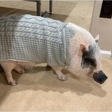 Photo for Looking For A Pet Pig Visitor For 1 Other Pet In Buckingham