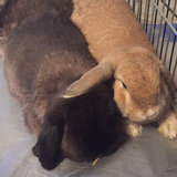Photo for Sitter Needed For 2 Rabbits In Miami