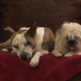 Photo for Sitter Needed For 2 Dog, 2 Cat In Lubbock