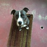 Photo for Walker Needed For 1 Dog In San Bruno