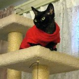 Photo for Part-time Pet Sitter Needed For 1 Cat In Halcottsville