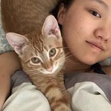 Photo for Need Cat Sitter Dec 25-27, An Hour Daily