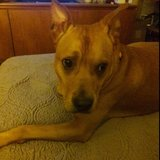 Photo for Looking For A Pet Sitter For 1 Dog In Kennesaw