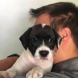 Photo for Pet-sitter, Walker