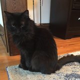 Photo for Sitter Needed For 1 Cat In Livermore