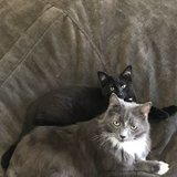 Photo for Looking For A Pet Sitter For 2 Cats In Charlotte