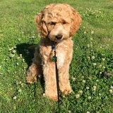 Photo for Dog Walker