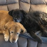 Photo for Looking For A Pet Sitter For 2 Dogs In Irwin