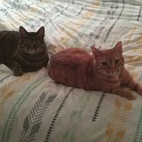 Photo for Looking For A Pet Sitter For 2 Cats In Van Nuys