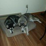 Photo for Walker Needed For 2 Dogs In Carmel