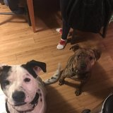 Photo for Looking For An Experienced Dog Walker For 2 Dogs In Saint Paul