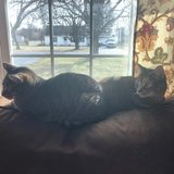 Photo for Cat Sitter In Henrietta 6/13-6/23