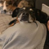 Photo for Looking For A Pet Sitter For 2 Dogs In Cincinnati