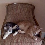 Photo for Sitter Needed For 4 Cats In Daytona Beach