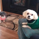 Photo for Looking For A Pet Sitter For 2 Dog Small Dogs In South Saint Paul
