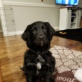 Photo for Puppy Sitter