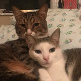 Photo for Caregiver For Cats: Part-time