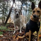 Photo for Sitter Needed For 3 Dogs, 2 Cats In Louisville