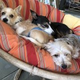 Photo for Looking For A Pet Sitter For 5 Dogs In Brooklyn