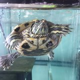 Photo for Sitter Needed For 2 Turtles In Philadelphia