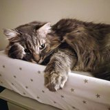 Photo for Sitter Needed For 1 Cat In Scottsdale  - December 24 To January 4