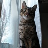 Photo for Sitter Needed For 1 Cat In Aurora