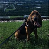 Photo for Looking For A Pet Sitter For 1 Dog In Cocoa