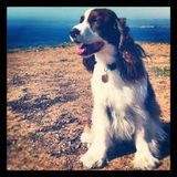 Photo for Sitter Needed For 1 Dog In Redondo Beach