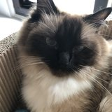 Photo for Looking For A Pet Sitter For 1 Cat In Columbia