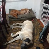 Photo for Live-in Pet Sitter For Thanksgiving/Christmas!