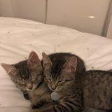 Photo for Sitter Needed For 2 Kittens In Chicago