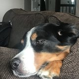 Photo for Looking For A Pet Sitter For 1 Dog In Lafayette