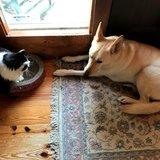 Photo for Reliable, Honest, Animal Lover Sitter