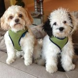 Photo for Sitter Needed For 2 Dogs In Pickerington - February 22 - March 3; Ongoing Travel